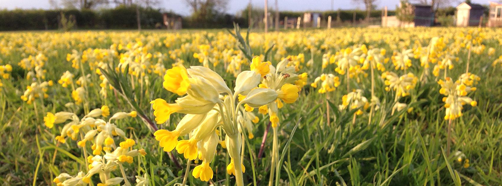 A flower in a field. A flower in a field of grass.