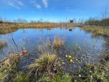 Wildlife pond & wildflower meadow