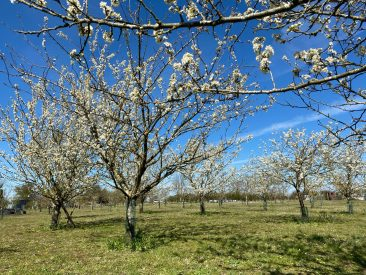 Orchard report 2021