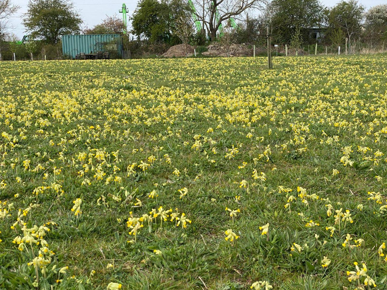 A flower in a field
